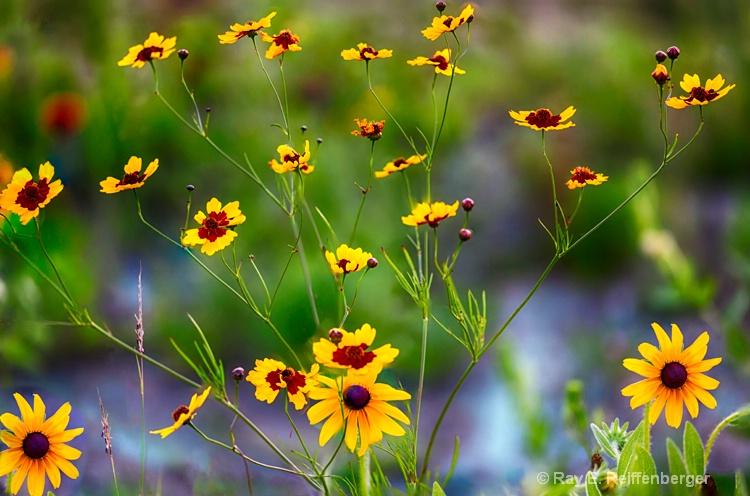 hoc0143 flower15