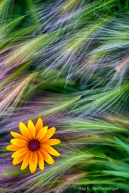 h0c9243 flower15