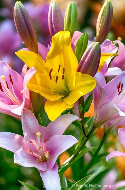 hoc1048 flower15