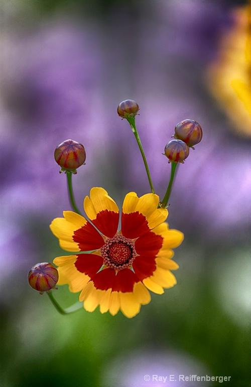 hoc9263 flower15