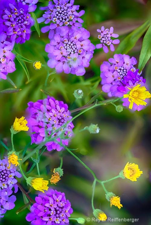 hoc9484 flower15