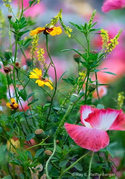 hoc9683 flower15