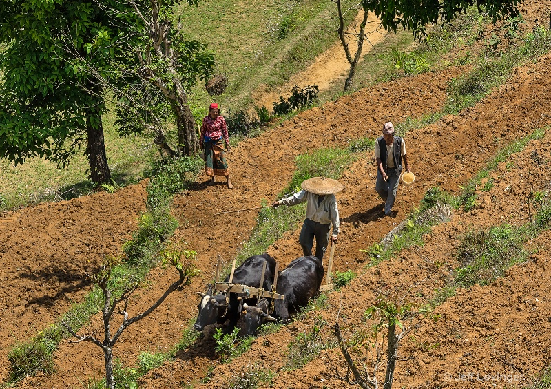 Tilling the Field, Begnas, Nepal   #811,
