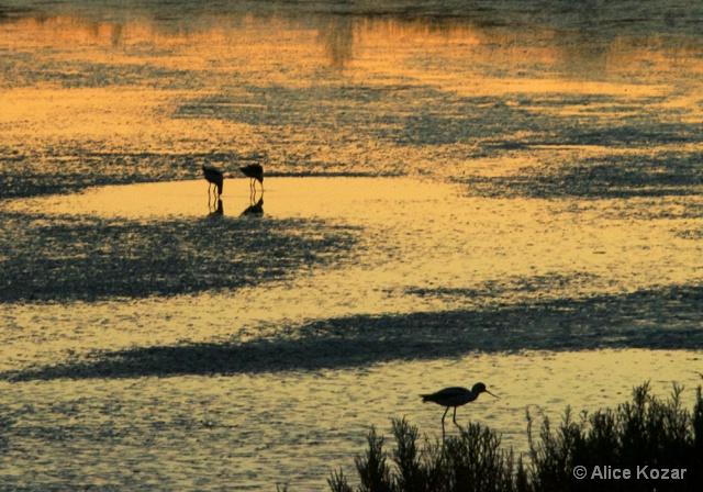 Baylands Birds-After Sunset Glow