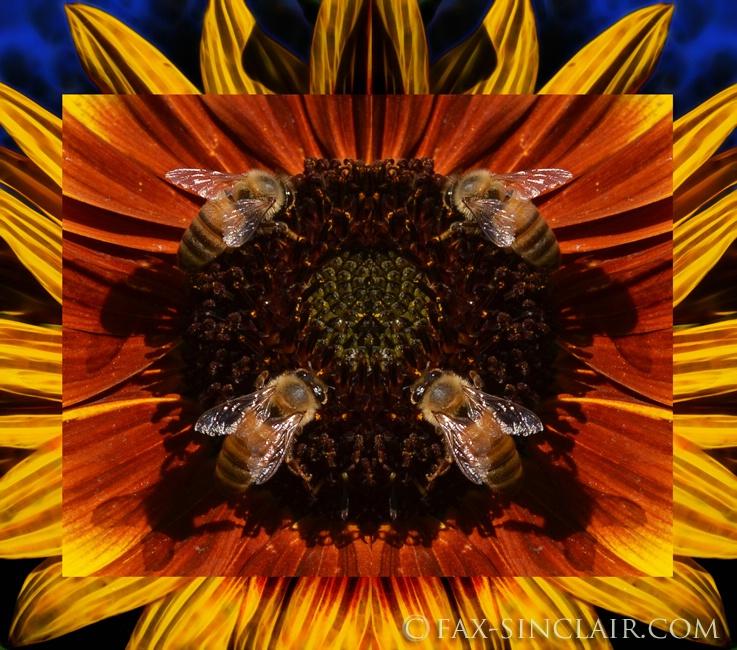 Bee Quad