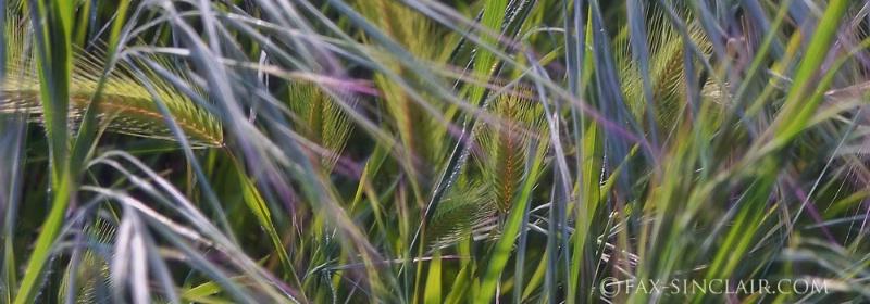 Fractal Grasses - Detail