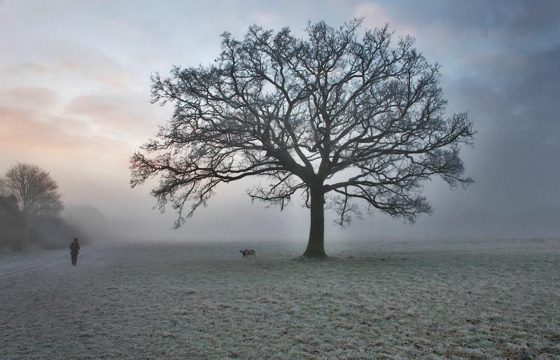 Foggy Icy Morning in Maidenhead