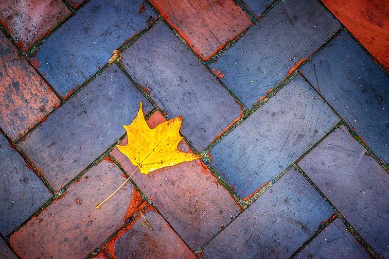 An Autumn Hint