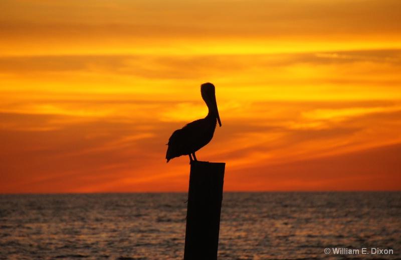 Redington Shores Sunset Pelican