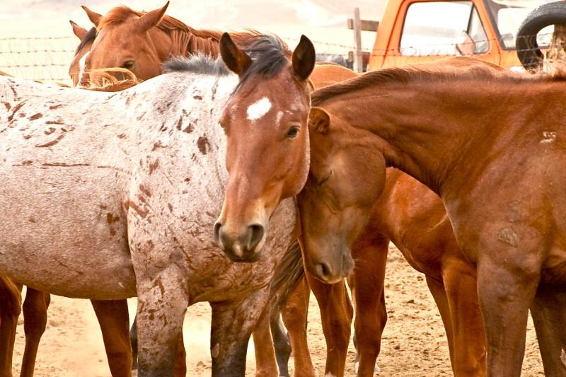 sn greasewood spring horses-83