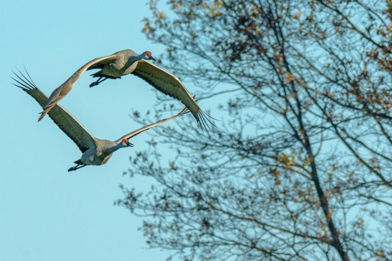 A Pair In Flight