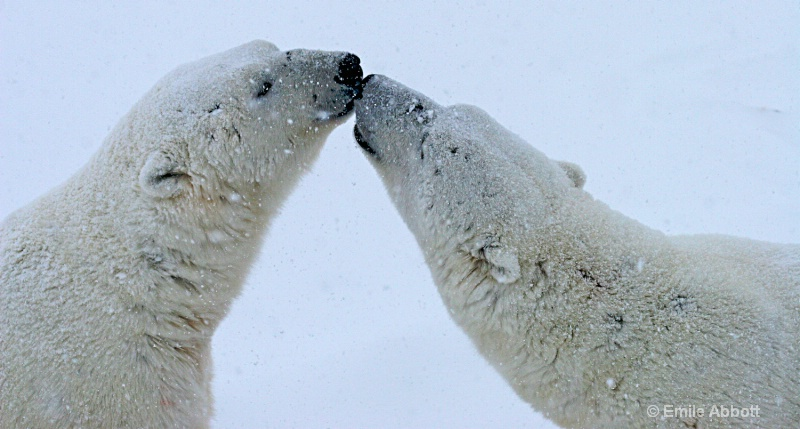 Giving a kiss at top of the world