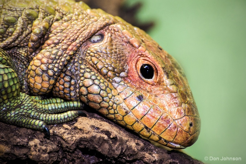 National Zoo Lizard 12-12-15 248