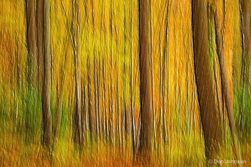 Artistic Abstract Forest 10-26-15 192