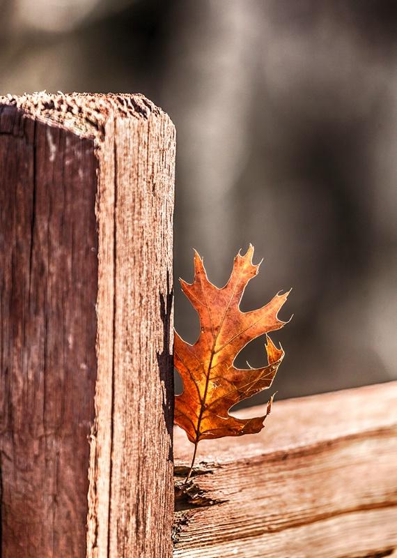 Autumn's Last Stand