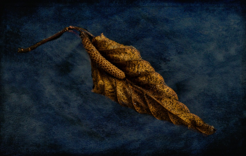 Nut Tree Autumn