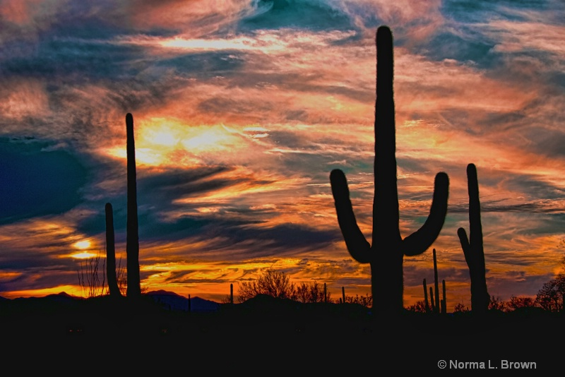 Tucson Cactus Sunset