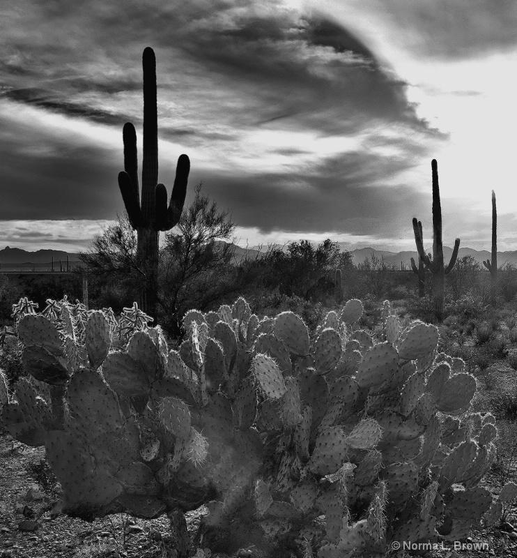 Sonoran Desert Sunset BW, AZ