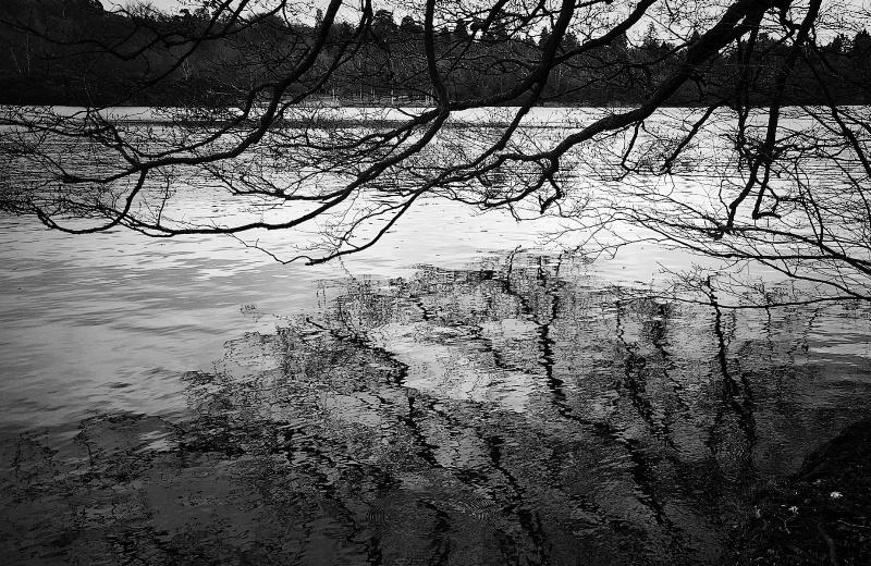 Mirrored Tree at the Lake