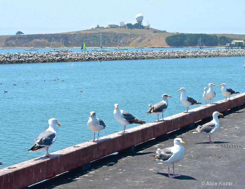 Seagull Patrol
