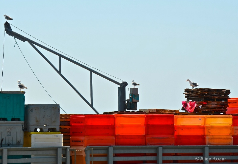 Gulls on Orange Crates HMB