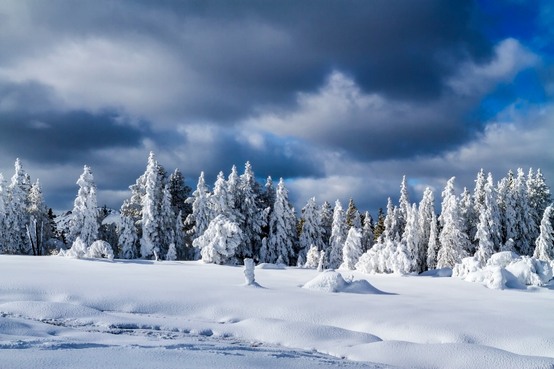 Winter Wardrobe  7033