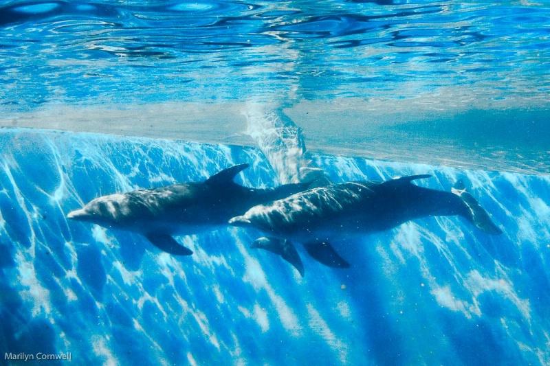 Dolphin Duet