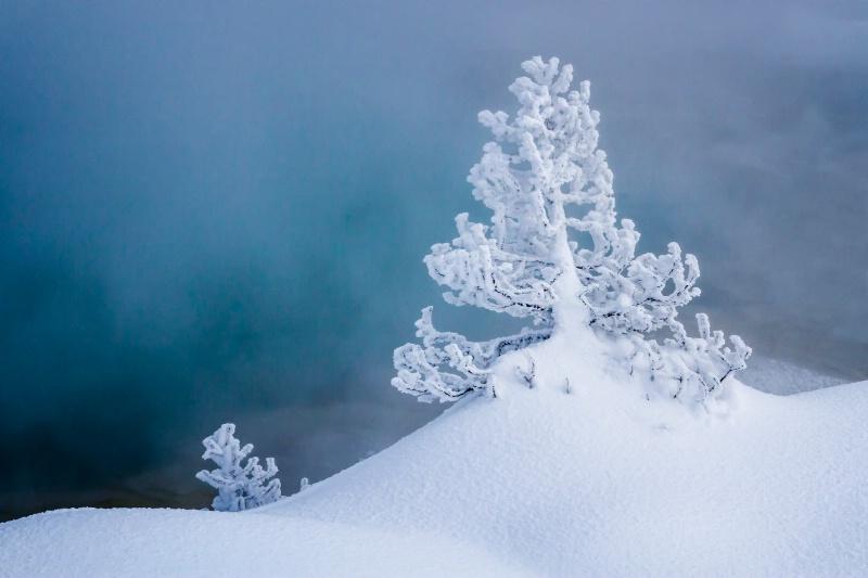 Snow Tree 6540