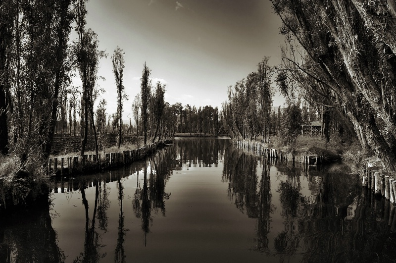 Reflections at Dawn in Sepia