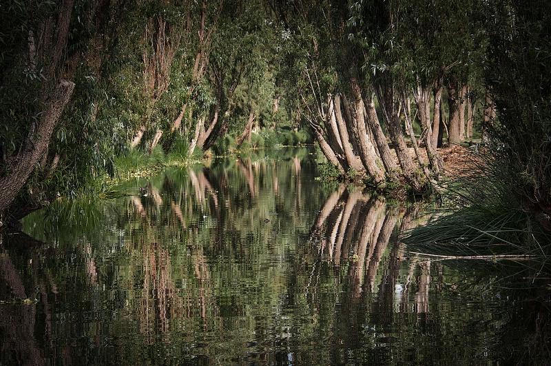 Fantastic Reflections at Xochimilco