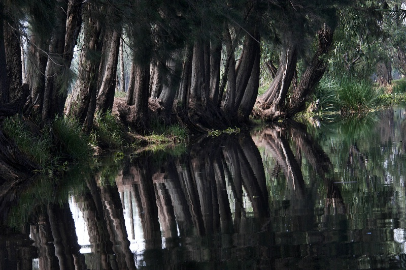 Symmetry at Xochimilco 2