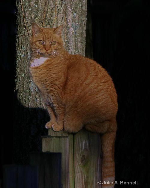 Neighbors Cat-1