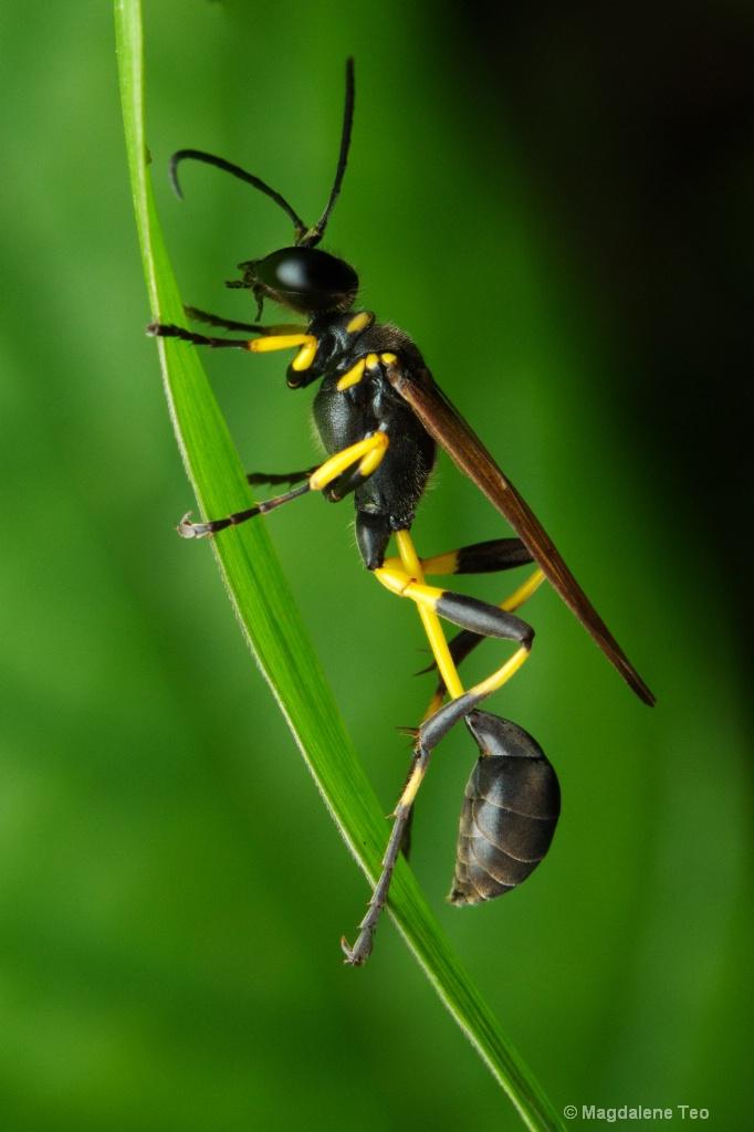 Macro - Wasp Close Up