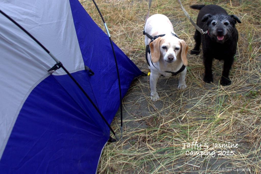 Last Camping Trip