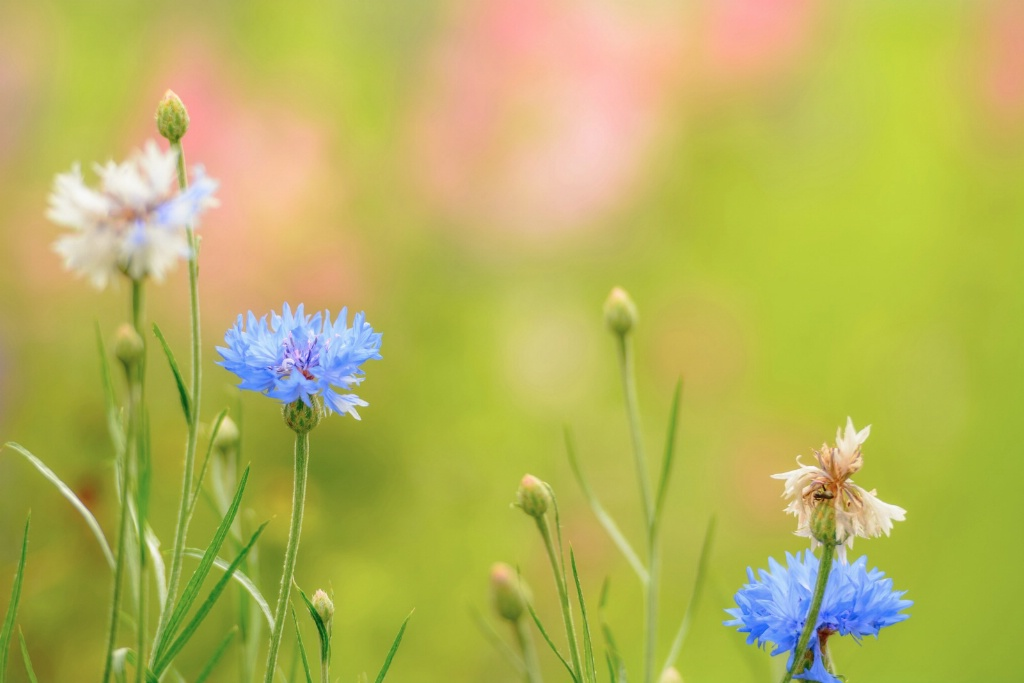 Soft Summer Garden