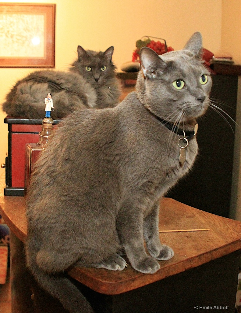 Mosby and Purr Seville