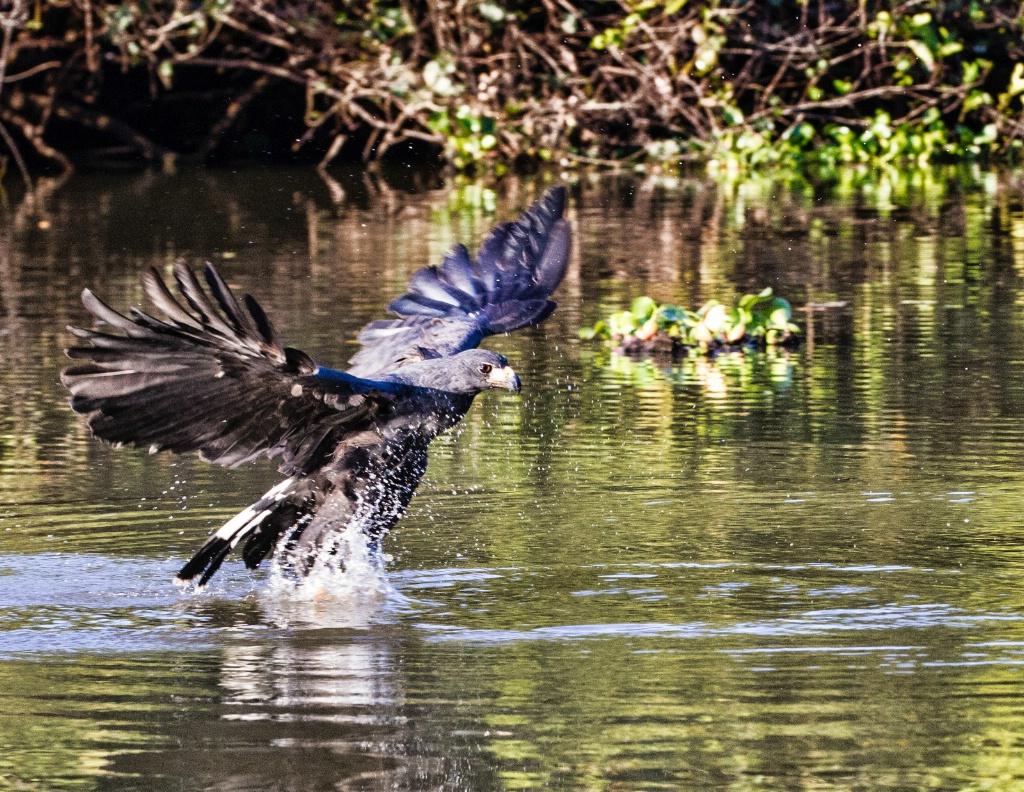 black hawk Fishing