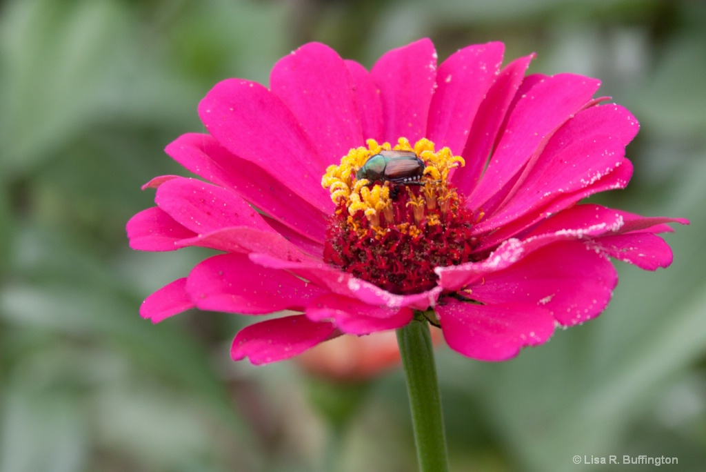 Hungry Beetle