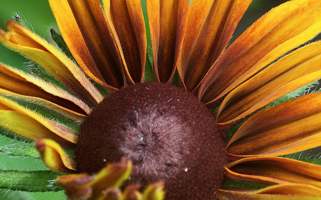 Petals and Core