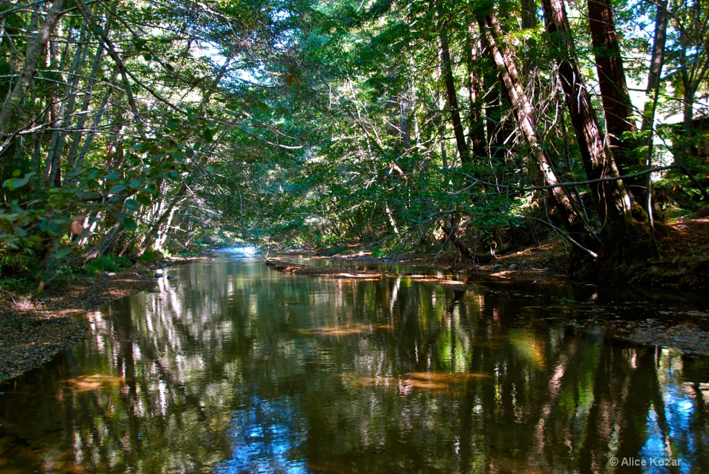 Big Sur River  Camp Grounds