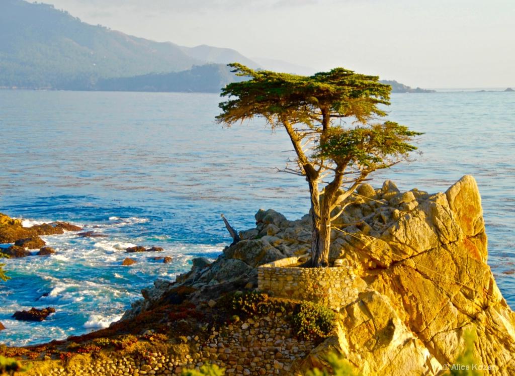 Pebble Beachs beloved lonesome Cypress