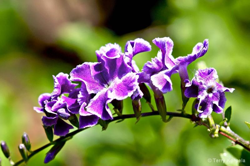 Tortola Botanical Garden