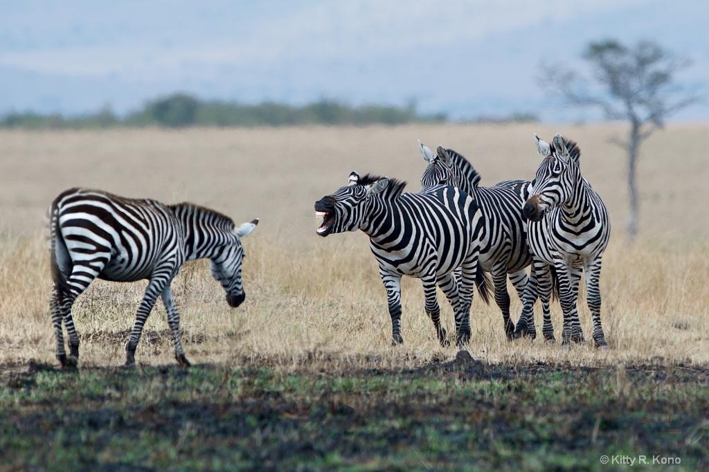 Expressive Zebra
