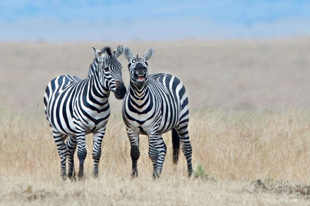 Chuckling Zebras