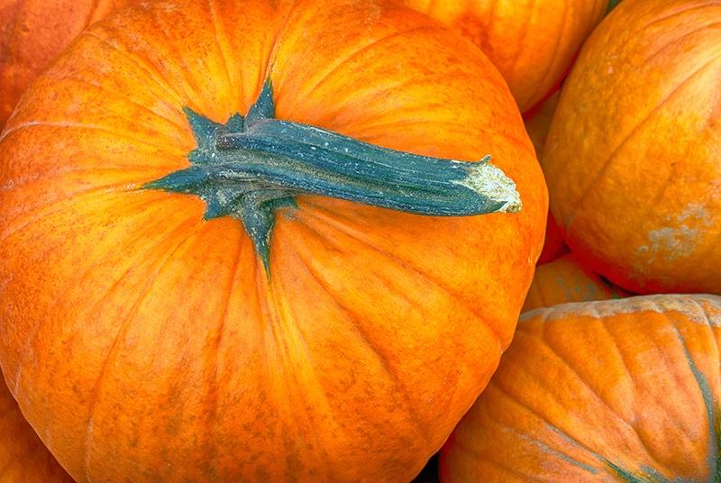 Autumn's Grip
