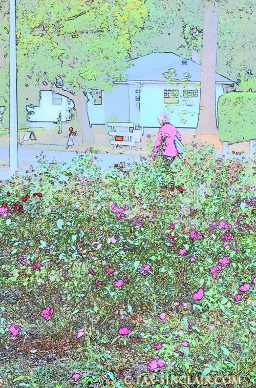 At Lee Rose Garden