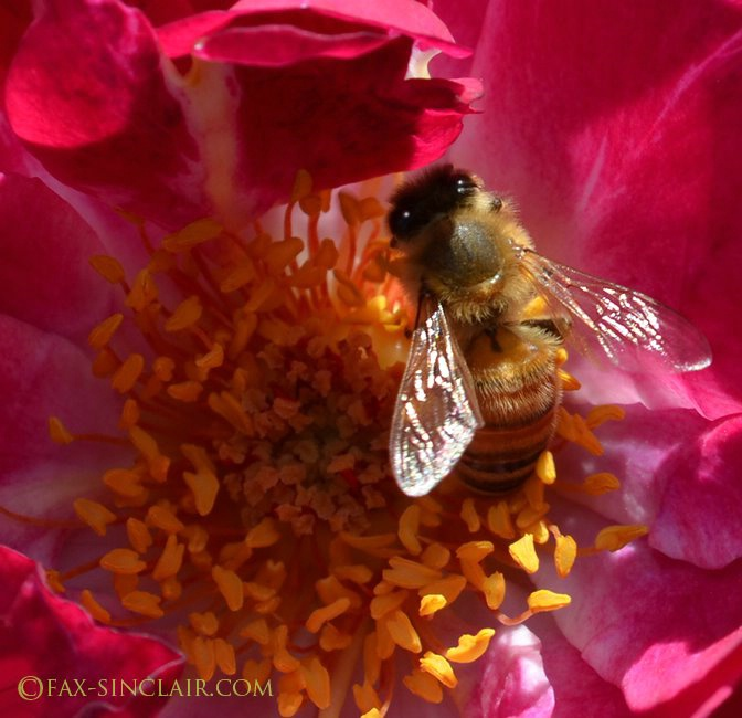 Bee Flare