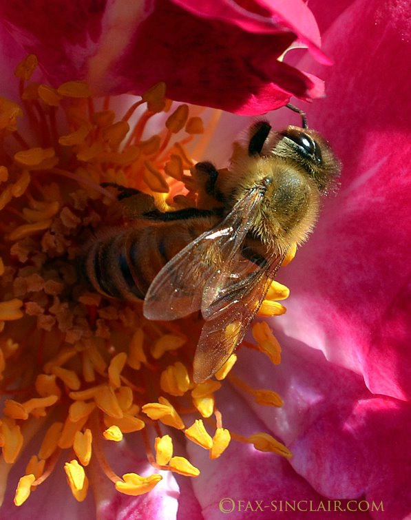 bee Mysterious