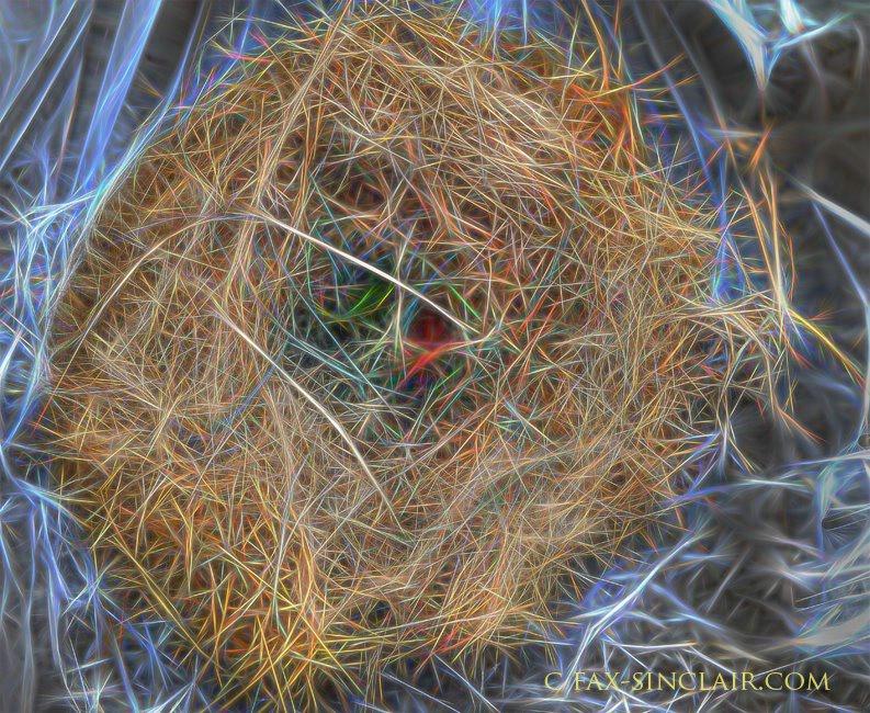 Nest FX