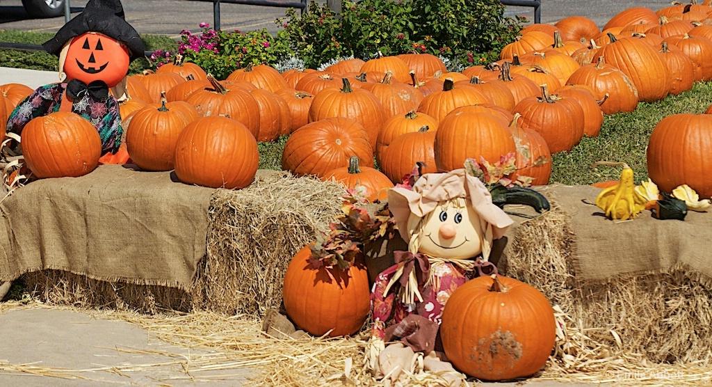 Pumpkin Patch #3